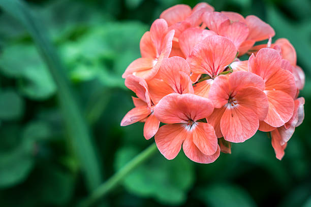 Orange red flower on green blurred background stock photo