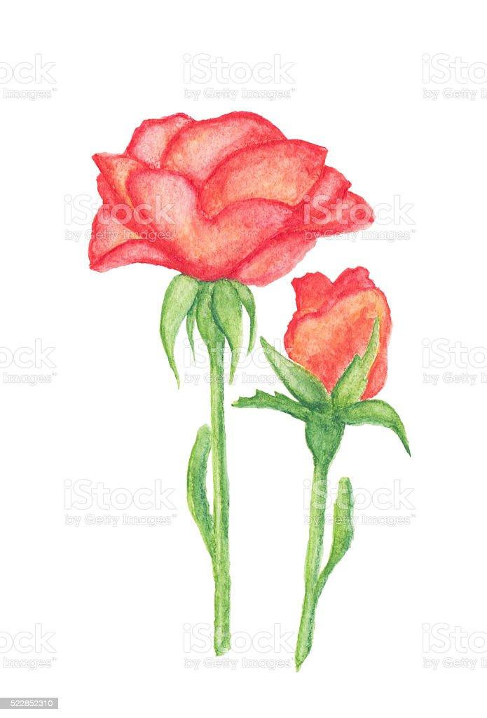 Arancio E Boccioli Di Rosa Acquerello Disegno Matite Fotografie