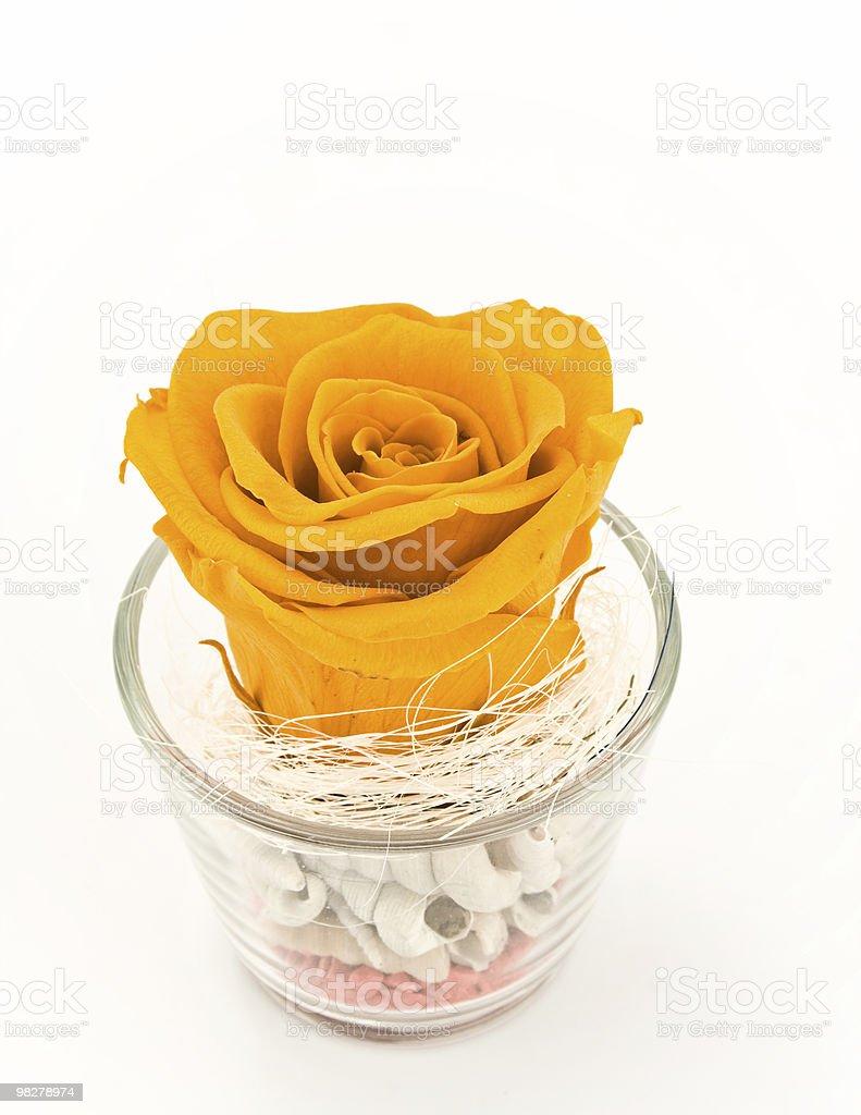 Arancione rosa foto stock royalty-free