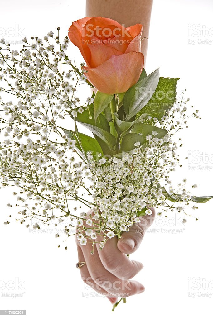 Orange Rose with Baby's Breath royalty-free stock photo