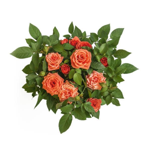 Orange roses bouquet surrounded by green leaves closeup top view of picture id955820578?b=1&k=6&m=955820578&s=612x612&w=0&h=i6ot6rdygtep 9q7k6v6jrk jadxlrlpxn61m6kgsoq=