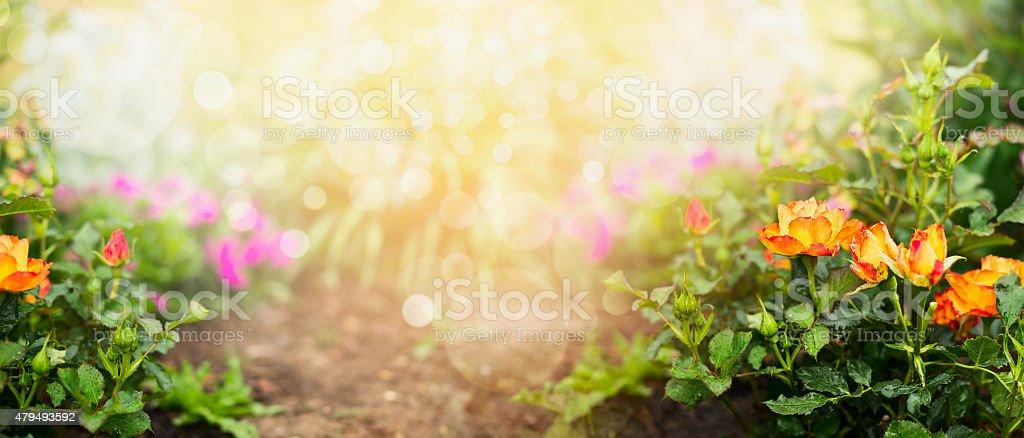 Naranja De Rosas Sobre Fondo Jardín De Flores Jardinería Concepto De ...