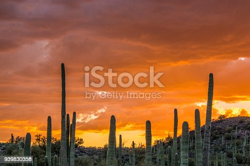 Silhouettes of different cacti at sunset with beautiful clouds in the desert. Desert sunset.