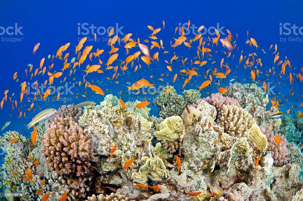 Orange sea stock photo