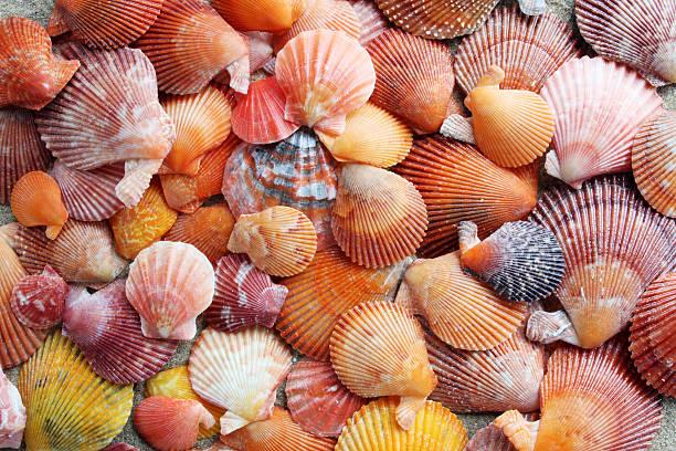 orange seashells - pink and orange seashell background stockfoto's en -beelden
