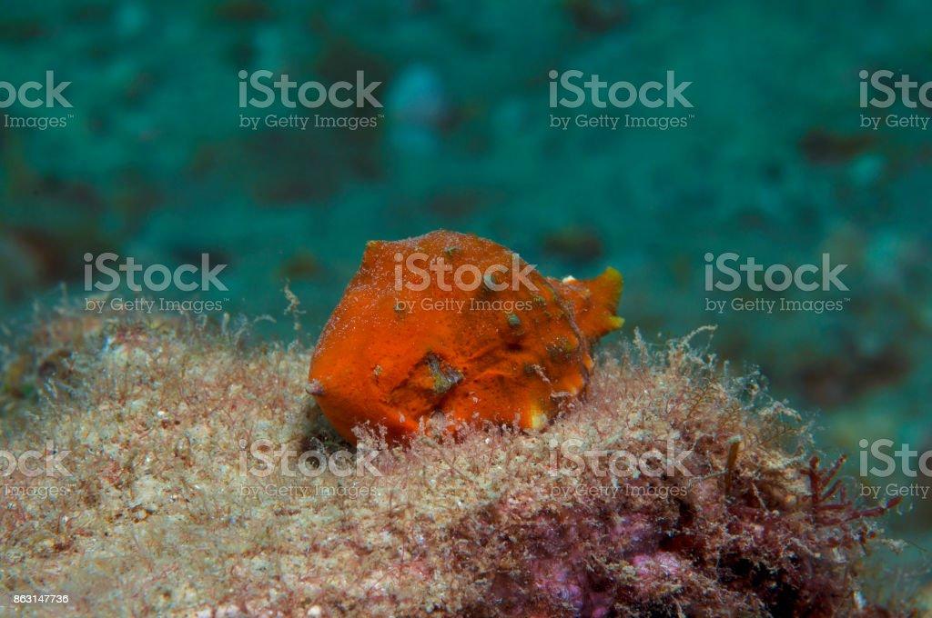 Orange shell stock photo