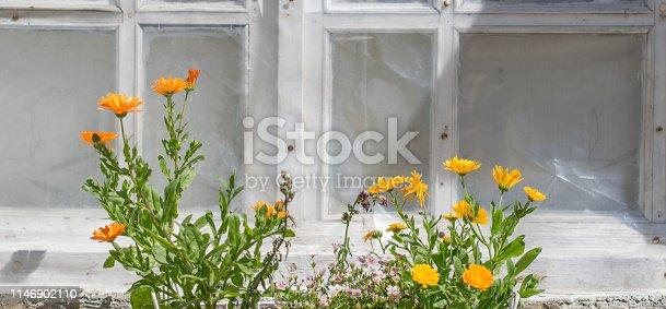 697868238 istock photo Orange spring fresh gerbera flowers near old window 1146902110