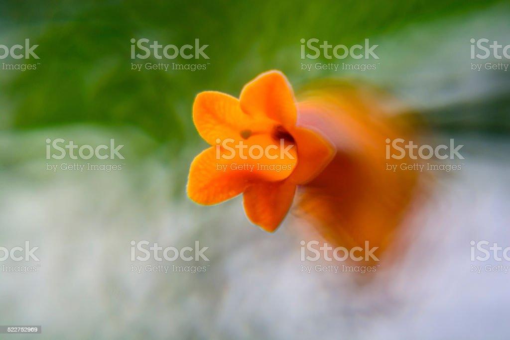 Orange Star stock photo