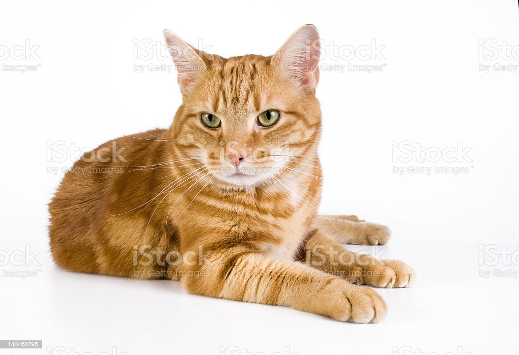 Orange striped cat with green eyes royalty-free stock photo