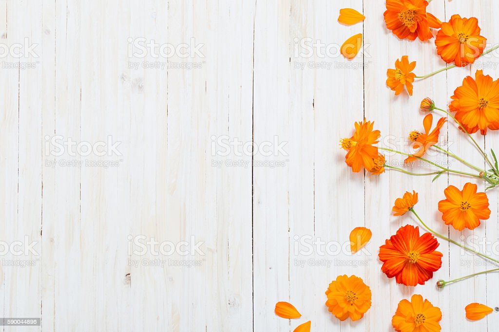 orange summer flowers on white wooden backgrond - foto stock