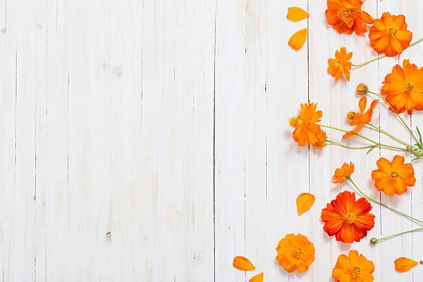 orange summer flowers on white wooden backgrond - foto stock