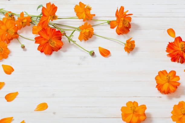 orange summer flowers on white wooden background - foto stock