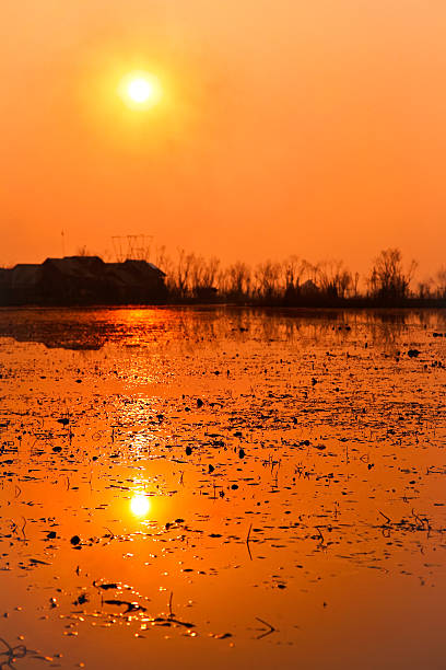 Orange sun over serene lake, vertical composition stock photo