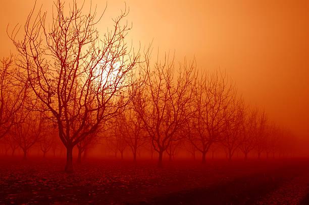 Orange Sunrise Behind Walnut Trees stock photo