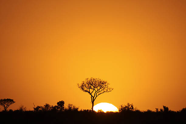 Orange sunrise silhouetting Kruger Park, South Africa A dramatic African sunrise in South Africa's Kruger National Park kruger national park stock pictures, royalty-free photos & images