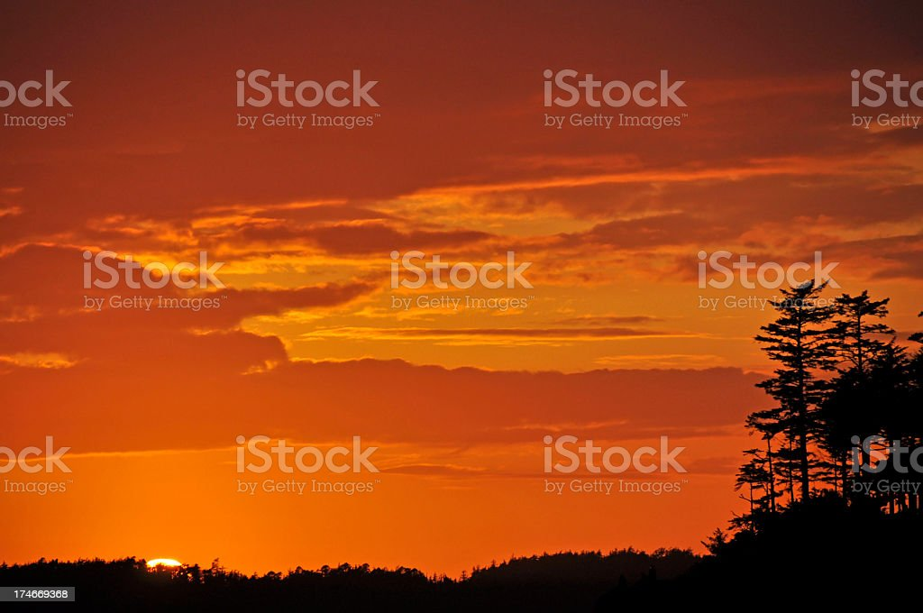 Orange Sunset and the Silhouettes of Conifer Trees stock photo