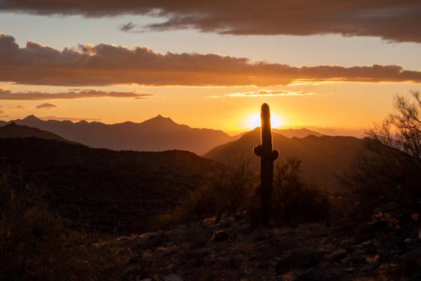 Orange sunset behind a cactus stock photo
