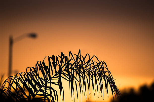 Orange sunset behind a palm tree stock photo
