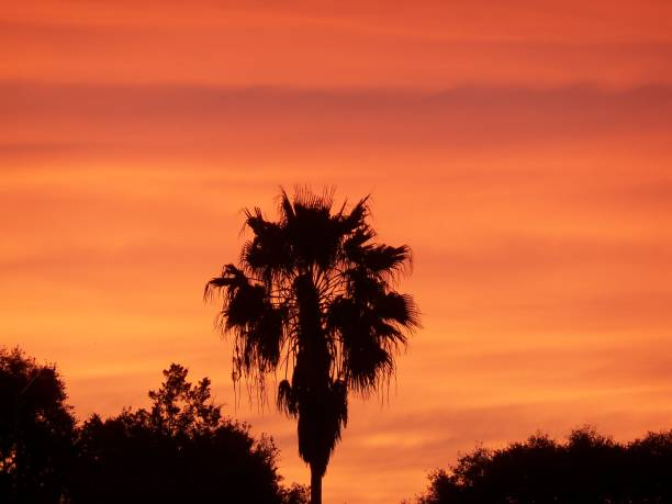 Orange sunset in Florida and a palm tree stock photo
