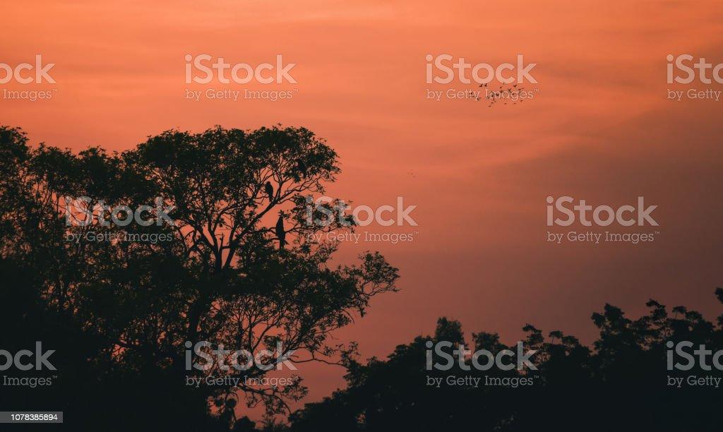 Orange sunset sky. stock photo