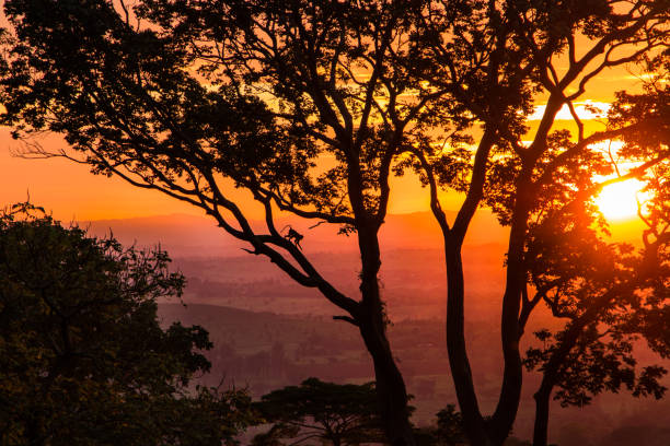 Orange sunset with silhouettes stock photo