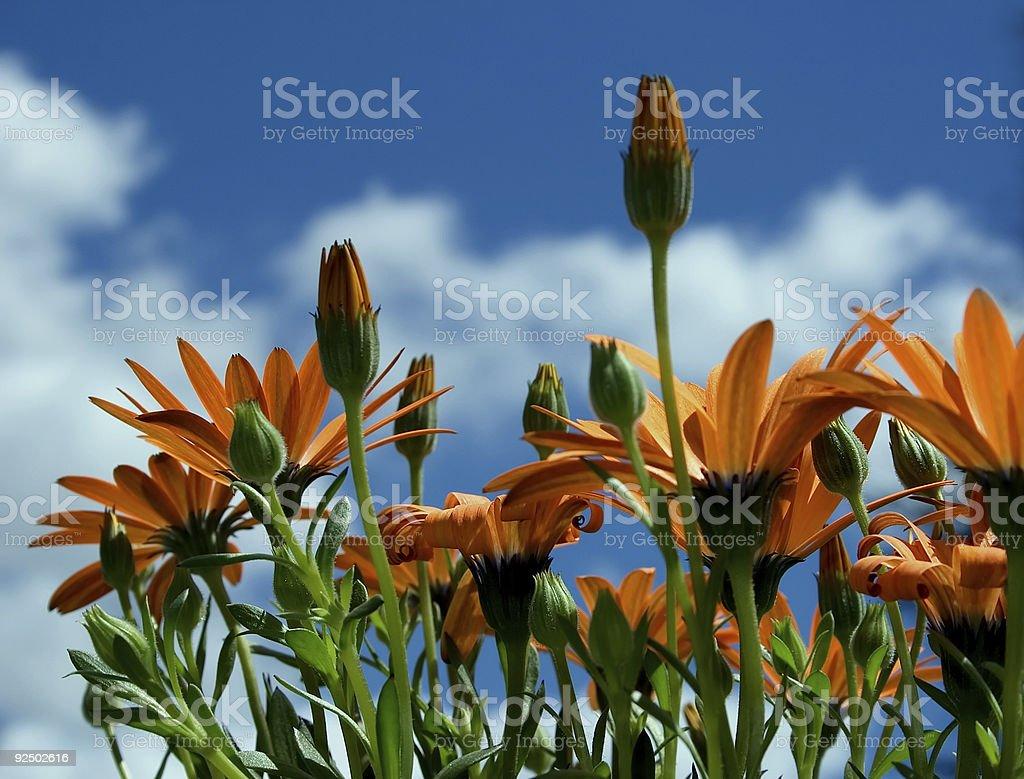 Orange Sunshine royalty-free stock photo