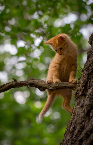 chat tigré orange sur le point de tomber au loin un arbre avec un inquiet - membre photos et images de collection