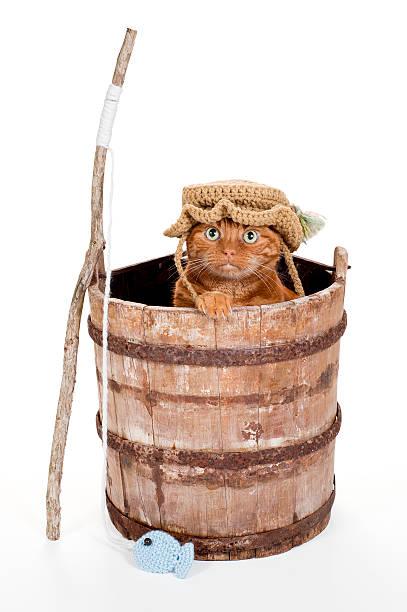 getigerten katzen angezogen wie ein fisherman - katzenhüte häkeln stock-fotos und bilder