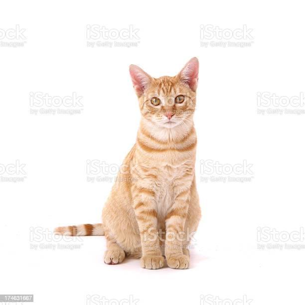 Orange tabby cat picture id174631667?b=1&k=6&m=174631667&s=612x612&h=jjp0cpc35sl92s8nf8xrtstlb2ljfz6aq3g bdibioc=