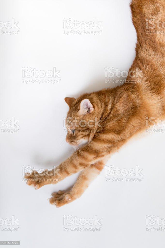 Orange Tabby Cat Stretching stock photo