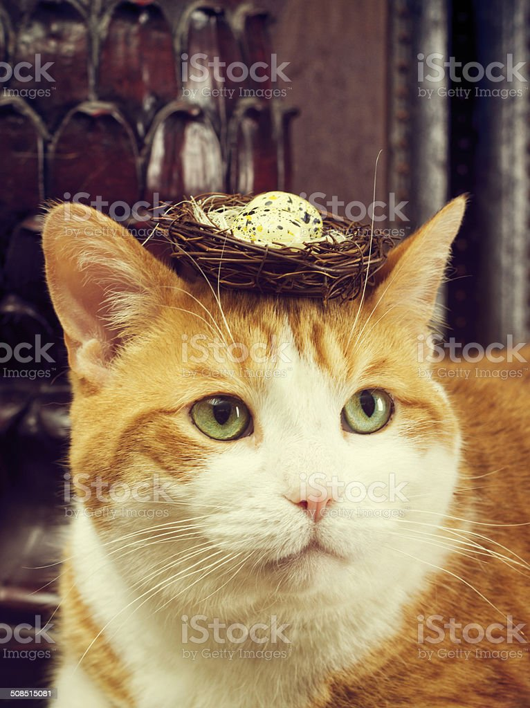 Orange Tabby Cat With A Birds nest On His Head royalty-free stock photo