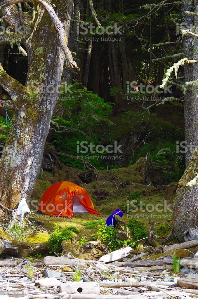 Orange tent pitched in the mossy shade near the shore photo libre de droits