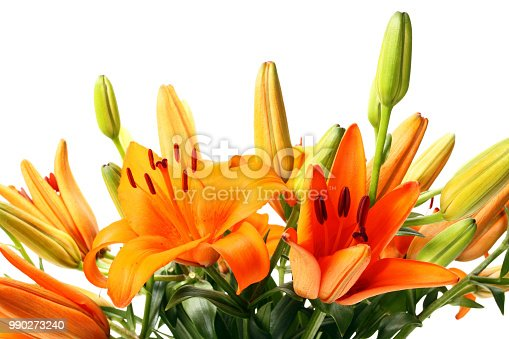 Orange Tiger Lily on a white  Background