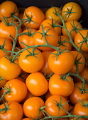 Fresh ripe not red but orange tomatoes from the green houses in the west to the the Netherlands