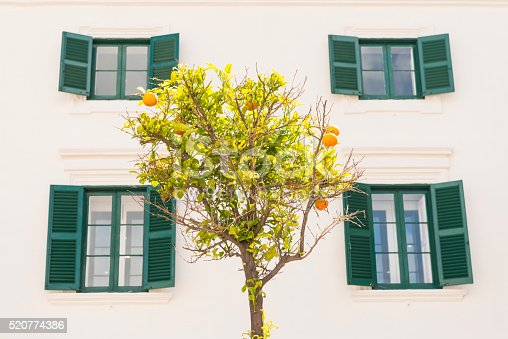Many oranges on the orange tree standing in front of a bright house, four windows with green shutters.