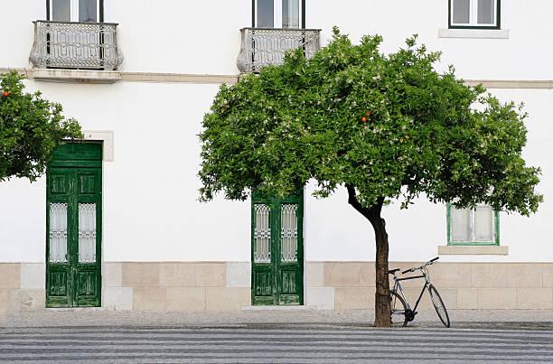 Orange tree und Fahrrad – Foto