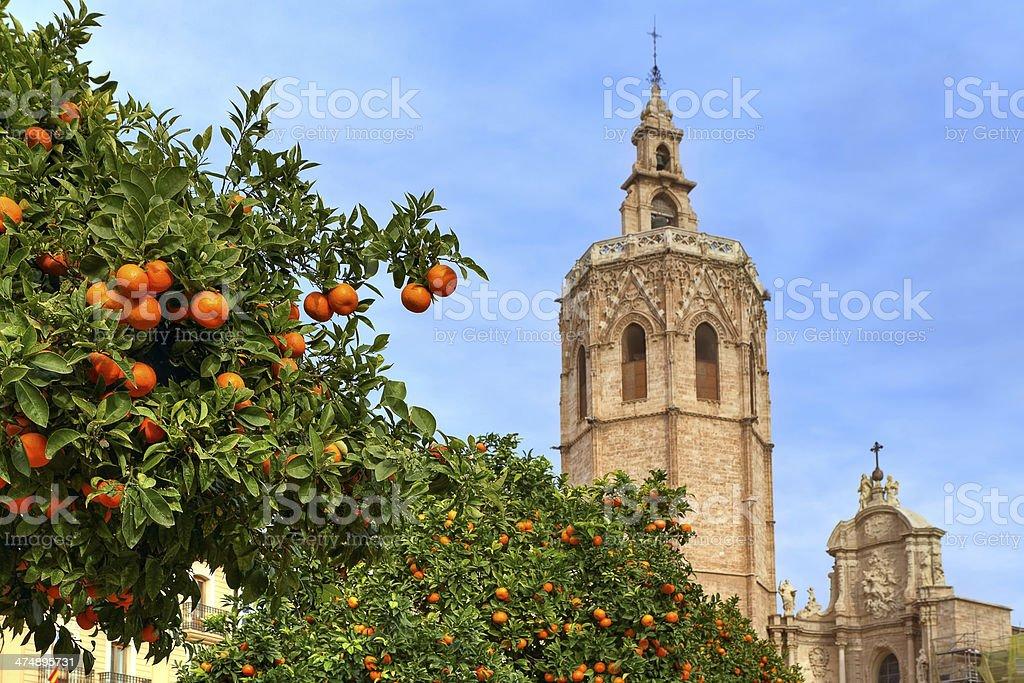 Orange tree and Valencia Cathedral. stock photo