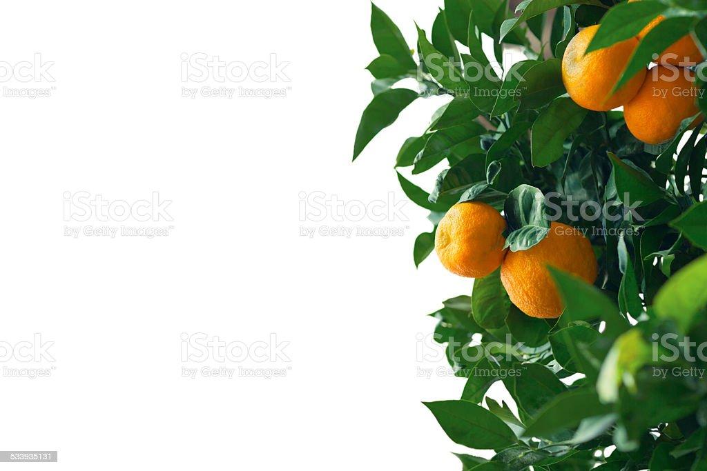Arancio di sfondo - foto stock