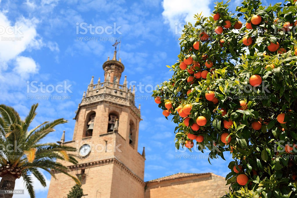 Orange tree in Ronda, Andalucia, Spain stock photo