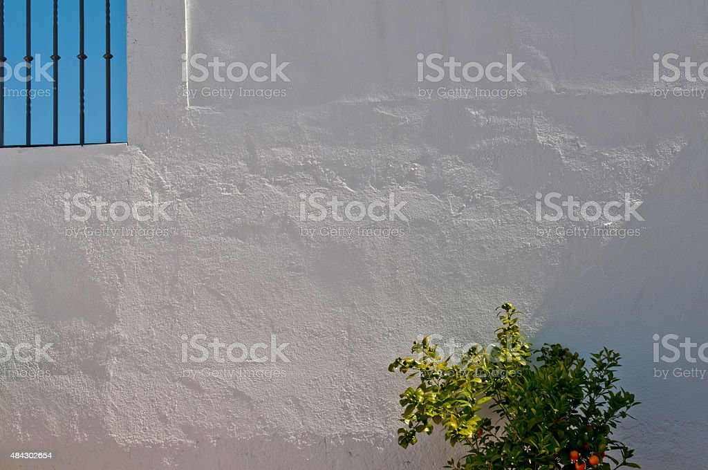 Orange Tree in Seville, Spain stock photo