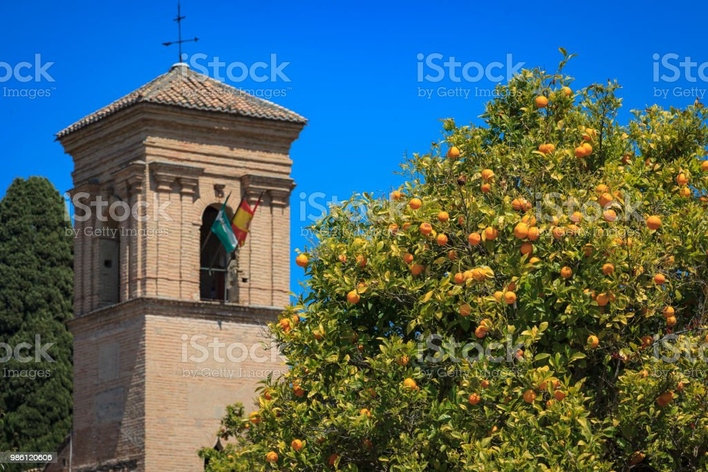 Orange tree in the Alhambra, Granada, Spain stock photo
