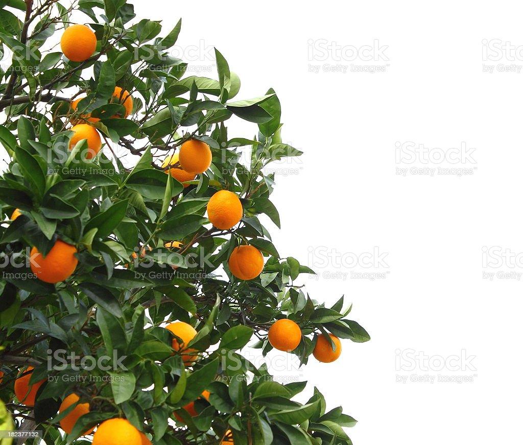 Arancio - foto stock