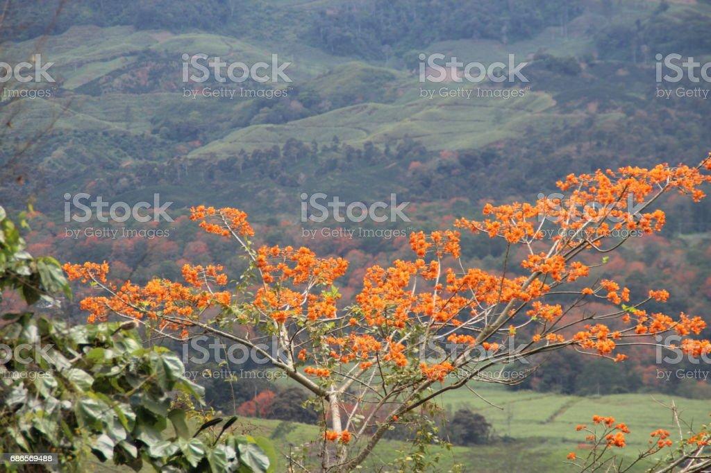 Orange tree foto stock royalty-free