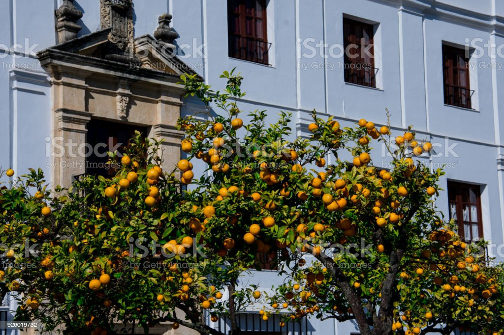 Orange tree with the an old building in the background stock photo