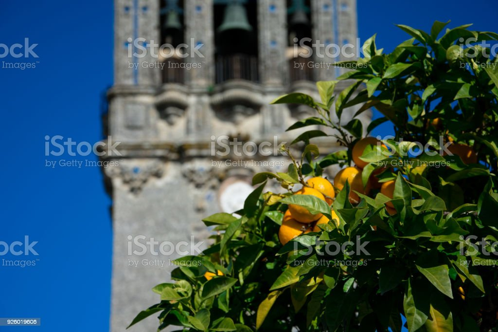 Orange tree with the Church of Santa Maria in the background stock photo