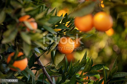 Orange - Fruit, Fruit, Citrus Fruit, Tangerine, Crete