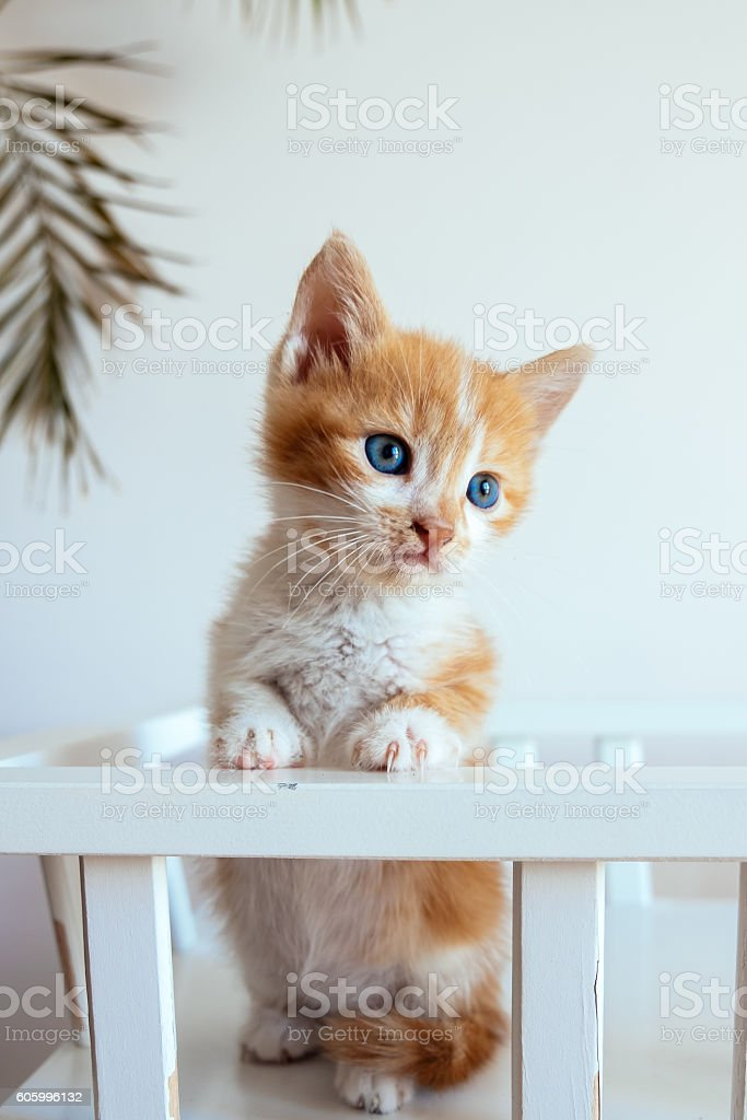 Orange white kitten - foto de stock
