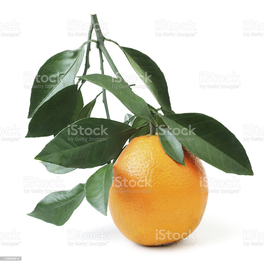Orange with green leaves royalty-free stock photo