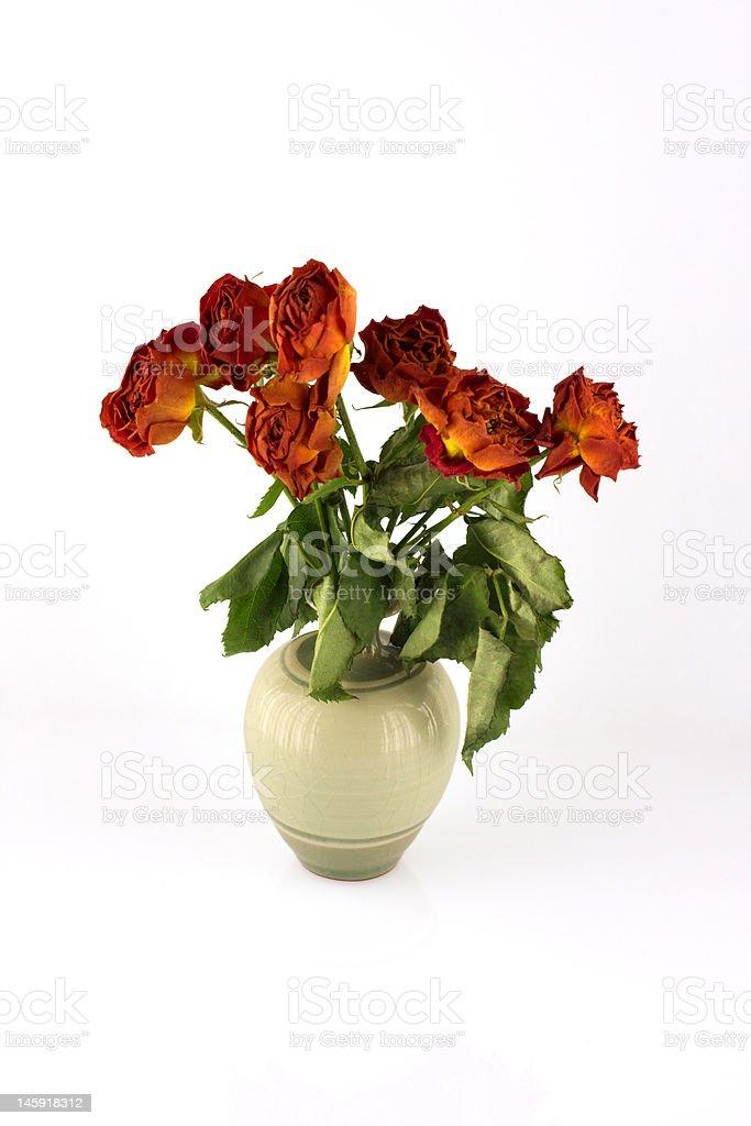 Orange withered roses, white background stock photo