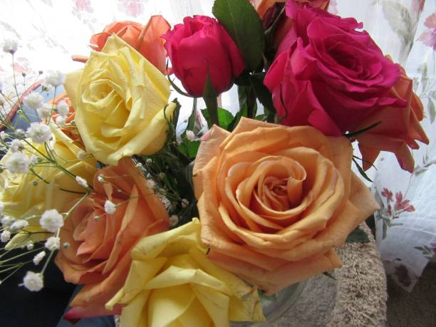 Orange, yellow, and red roses in bloom stock photo